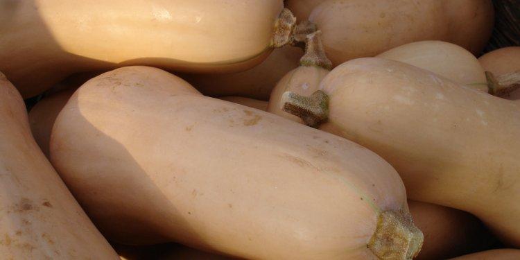 Carrboro Farmers Market - butternut squash