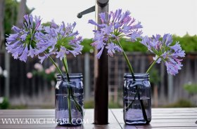 Lily of the nile in purple jar